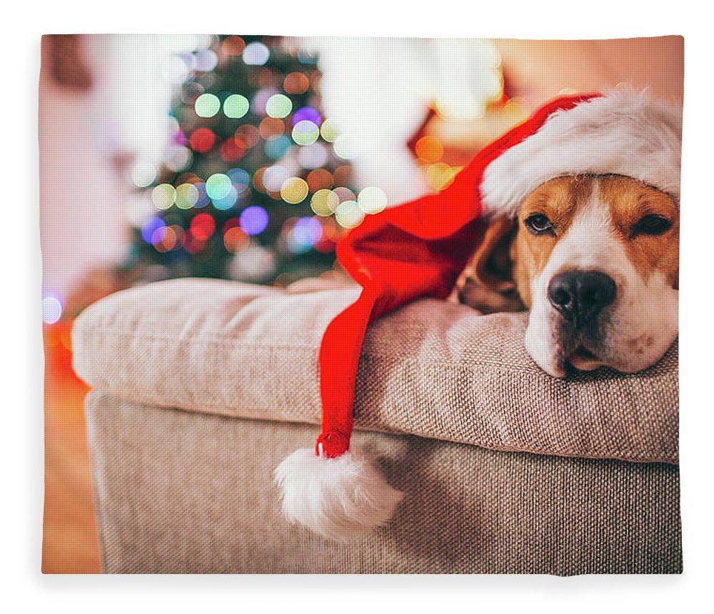 Pets Fleece Blanket featuring the photograph Beagle Santa by Aleksandarnakic
