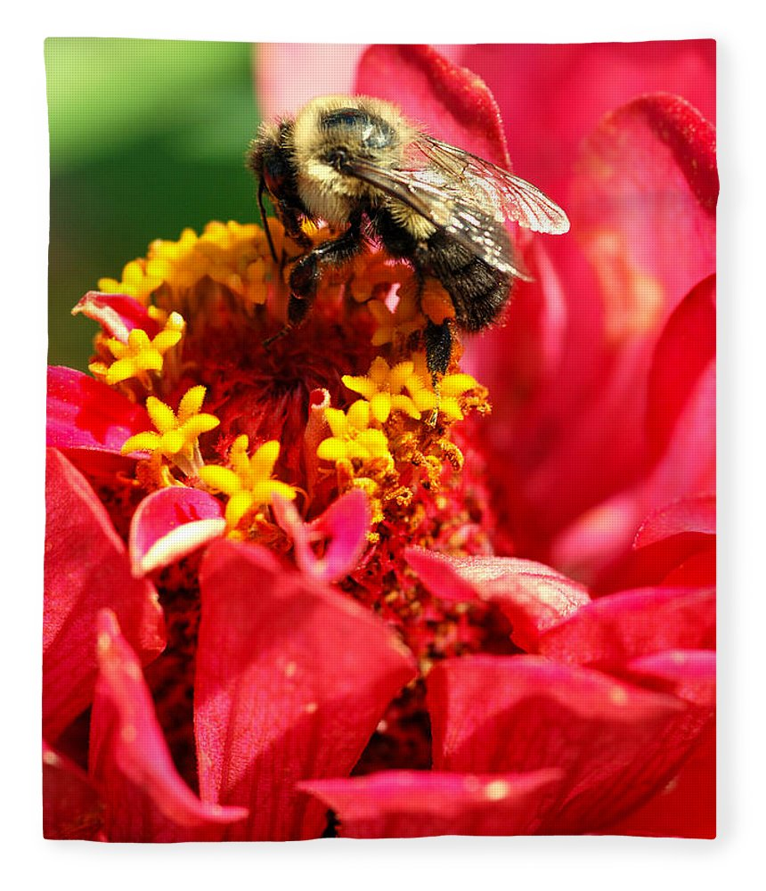 Zinnia Fleece Blanket featuring the photograph Bee On A Zinnia Flower by Optical Playground By MP Ray
