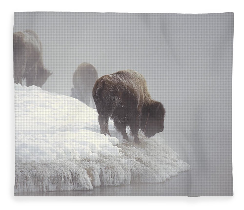 Feb0514 Fleece Blanket featuring the photograph Bison Along Snowy Riverbank Yellowstone by Konrad Wothe