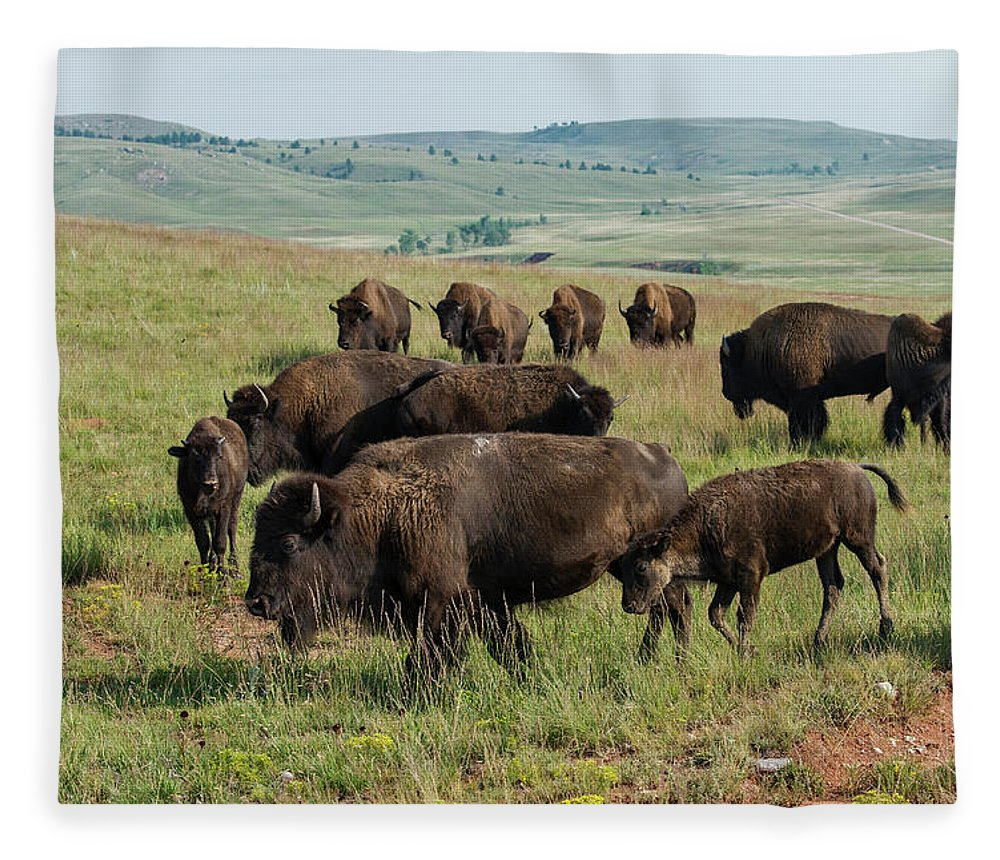 Grass Fleece Blanket featuring the photograph Bison Buffalo In Wind Cave National Park by Mark Newman