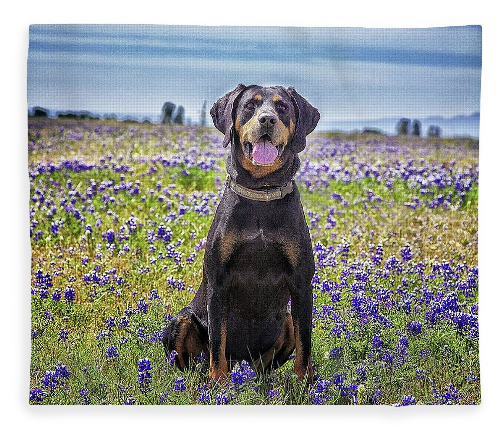 Animal Themes Fleece Blanket featuring the photograph Black And Tan Coonhound In Field Of by Sunmallia Photography