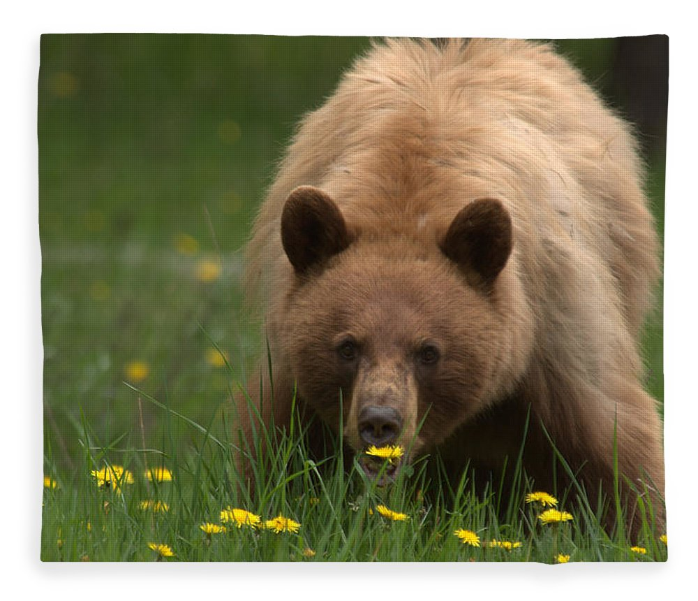 Bear Fleece Blanket featuring the photograph Black Bear by Frank Madia