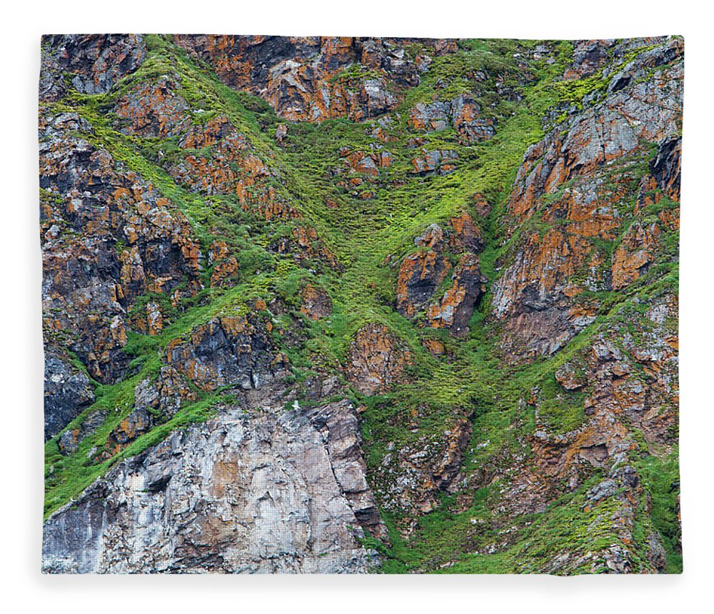Grass Fleece Blanket featuring the photograph Black Legged Kittiwake Cliffs In The by Anna Henly