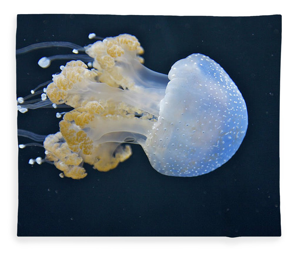 Underwater Fleece Blanket featuring the photograph Blue And White Underwater Living Sea by Barry Winiker