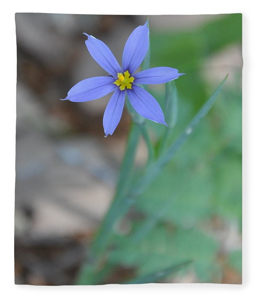 Blue Fleece Blanket featuring the photograph Blue Flower by Frank Madia