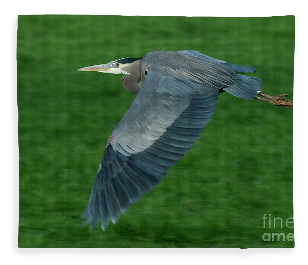Birds Fleece Blanket featuring the photograph Blue Heron by Rod Wiens