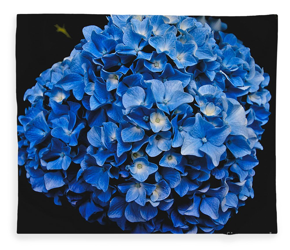 Blue Hydrangea Fleece Blanket featuring the photograph Blue Hydrangea 1 by William Norton