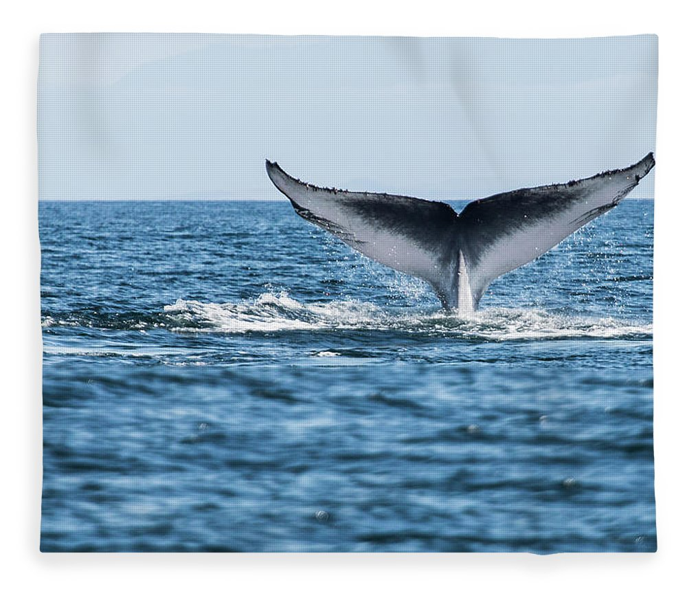 Blue Whale Fleece Blanket featuring the photograph Blue Whale Balaenoptera Musculus Tail by Michael Mike L. Baird Flickr.bairdphotos.com