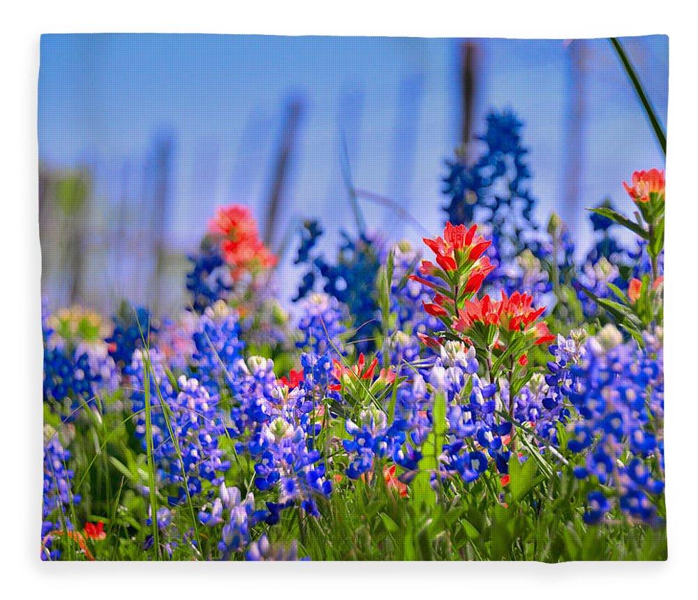 Bluebonnet Paintbrush Texas Wildflowers Landscape Flowers Fence