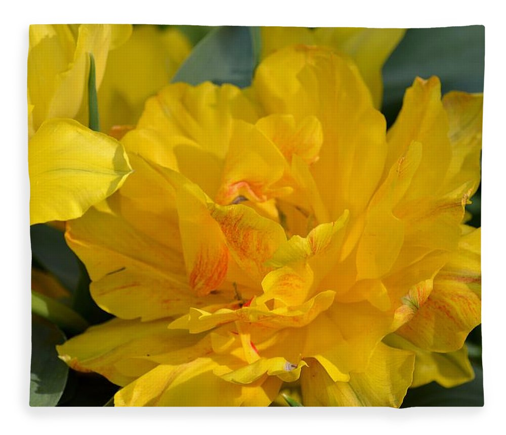 Blushing Yellow Fleece Blanket featuring the photograph Blushing Yellow by Maria Urso