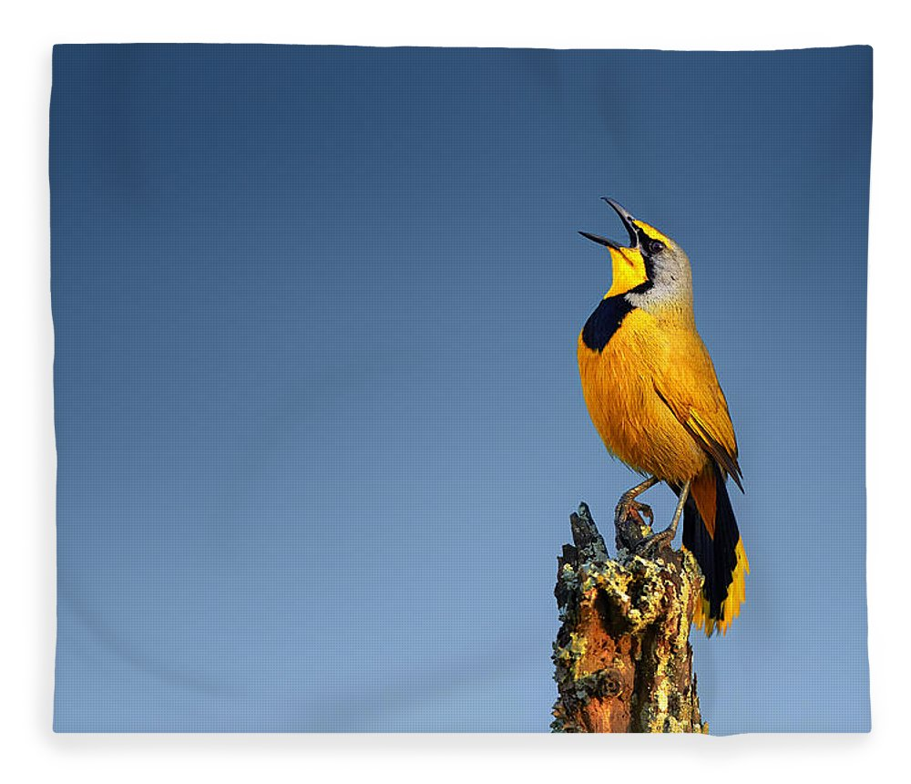 Bokmakierie Fleece Blanket featuring the photograph Bokmakierie Bird Calling by Johan Swanepoel