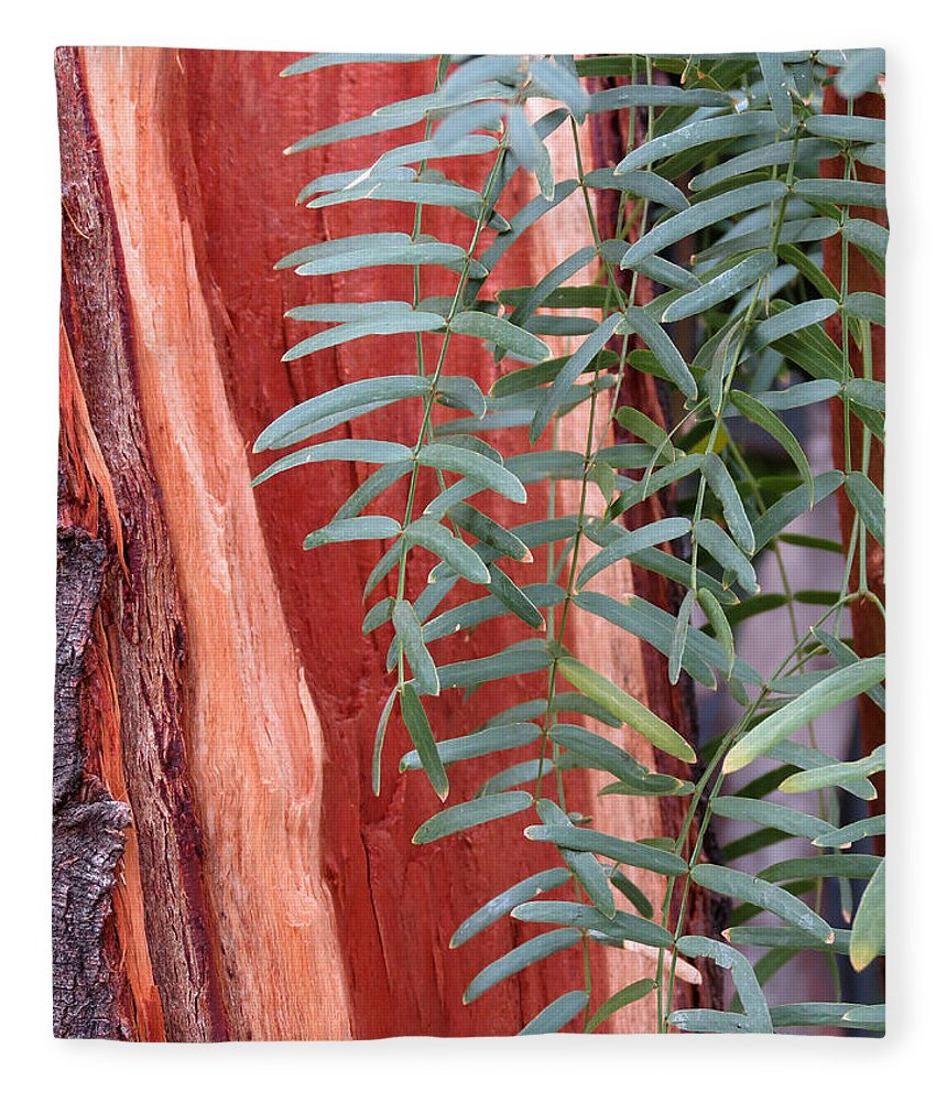 Tree Fleece Blanket featuring the photograph Branches And Bark by Laurel Powell