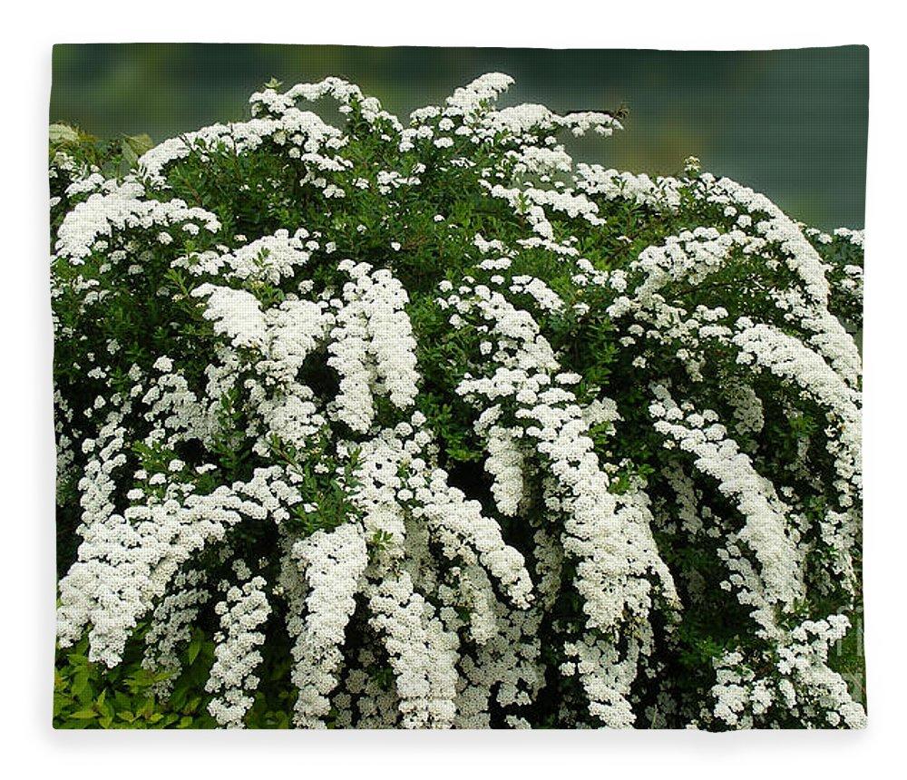 Bridal Wreath Spirea White Flowers Florist Fleece Blanket For