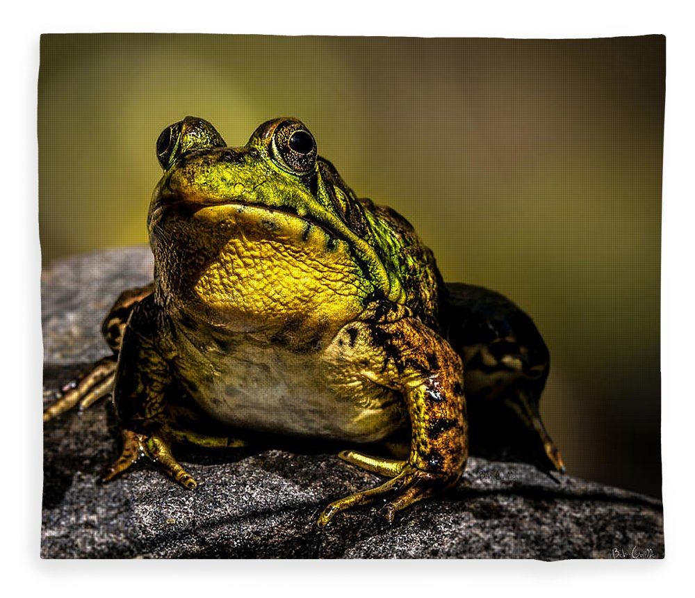 Frog Fleece Blanket featuring the photograph Bullfrog Watching by Bob Orsillo