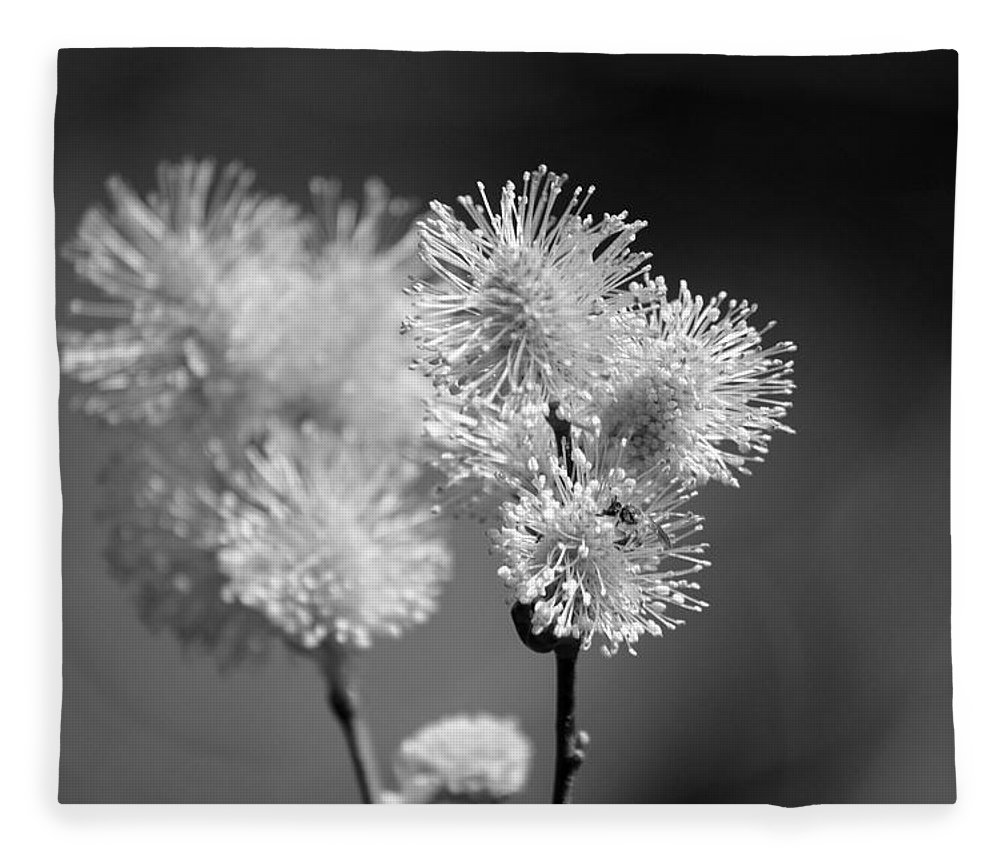 Pussy Willow Fleece Blanket featuring the photograph Burst by Lisa Kane