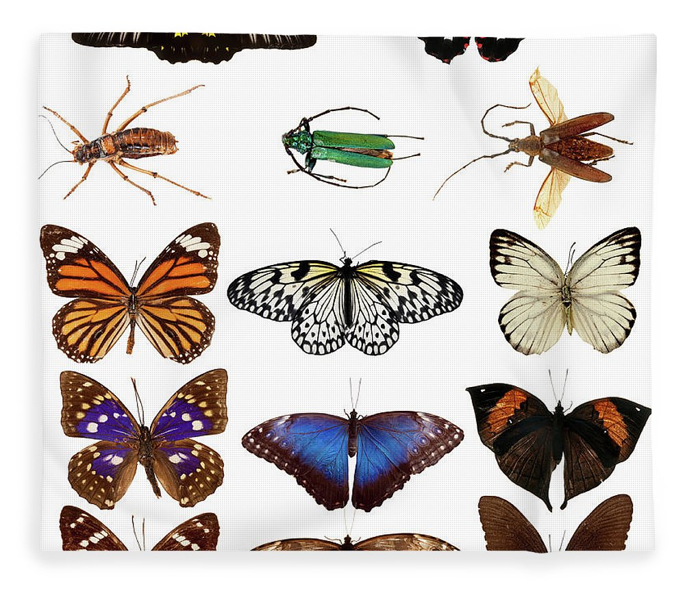 Common Blue Butterfly Fleece Blanket featuring the photograph Butterflies And Beetles by Mashabuba
