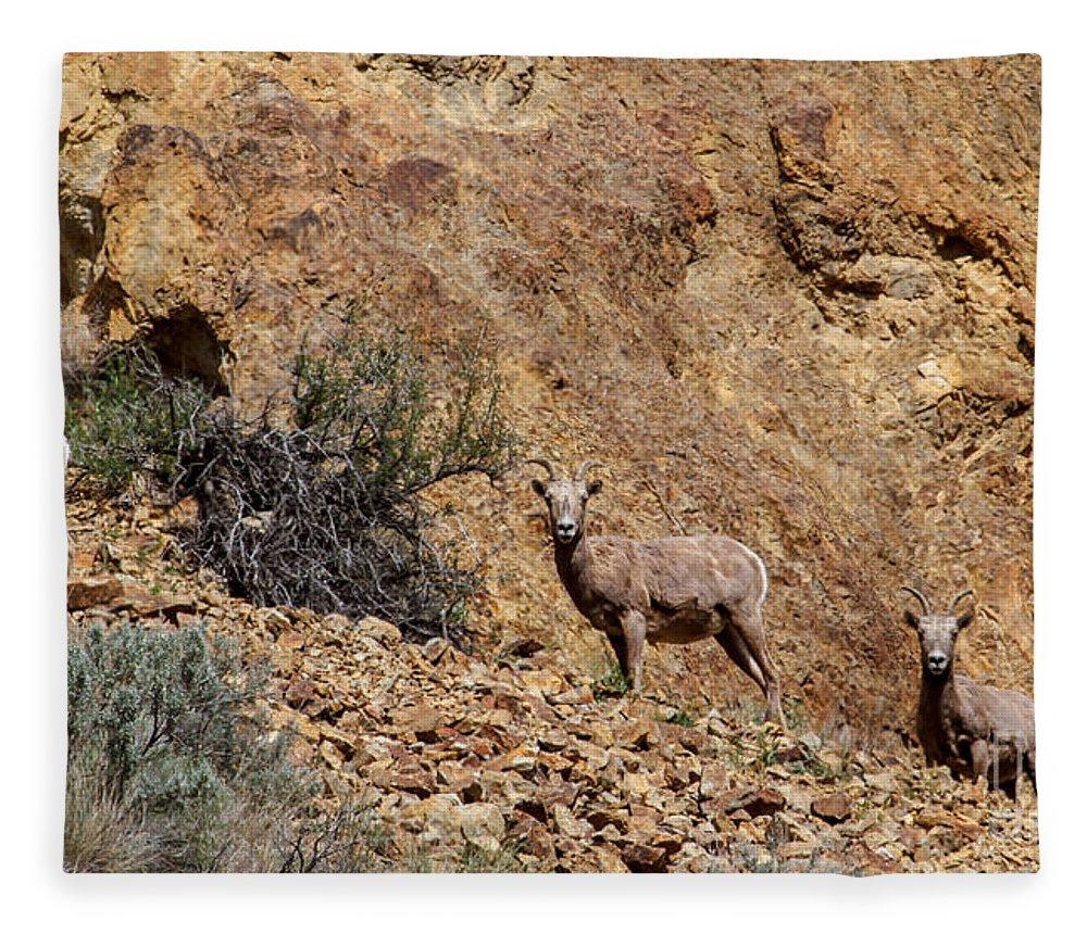 Sheep Fleece Blanket featuring the photograph California Bighorn Sheep by Robert Bales