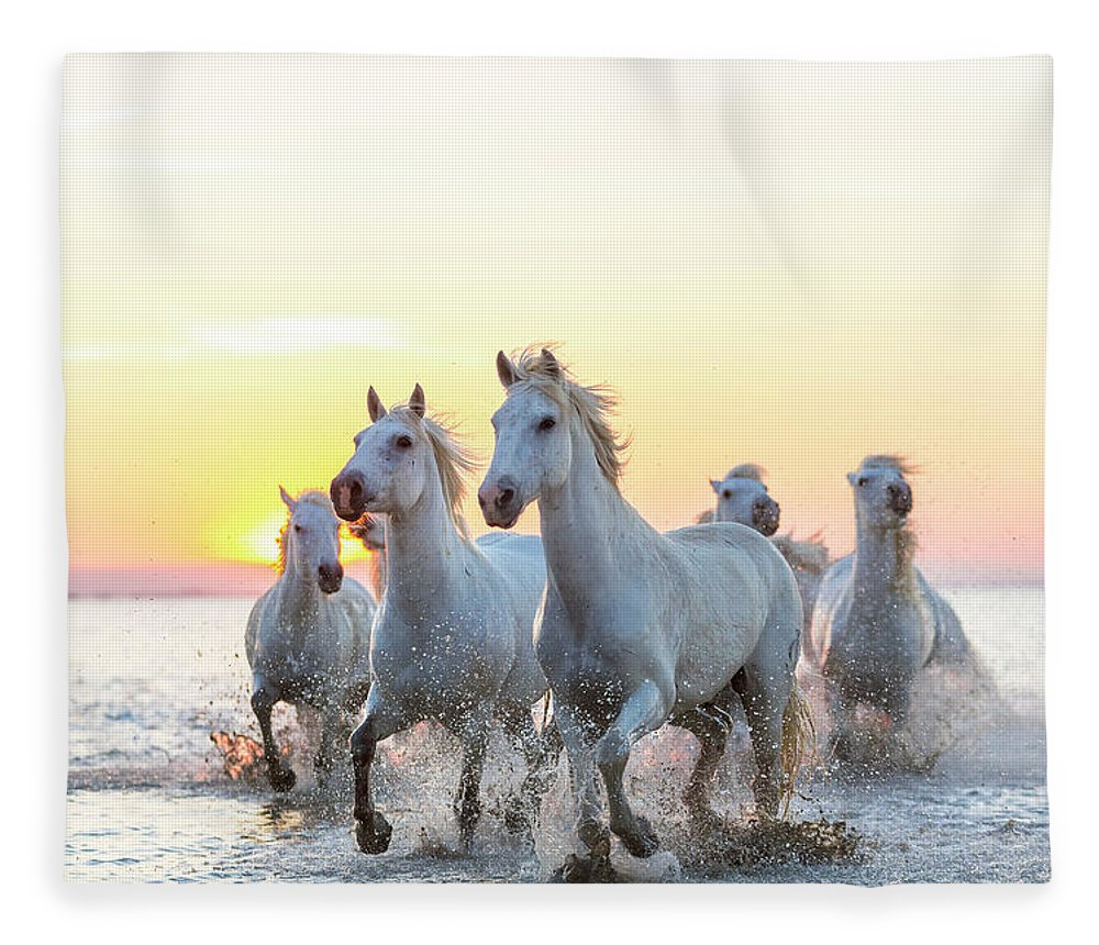 Animal Themes Fleece Blanket featuring the photograph Camargue White Horses Running In Water by Peter Adams