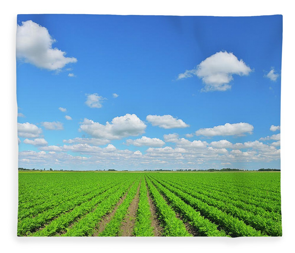 Tranquility Fleece Blanket featuring the photograph Carrot Field by Raimund Linke