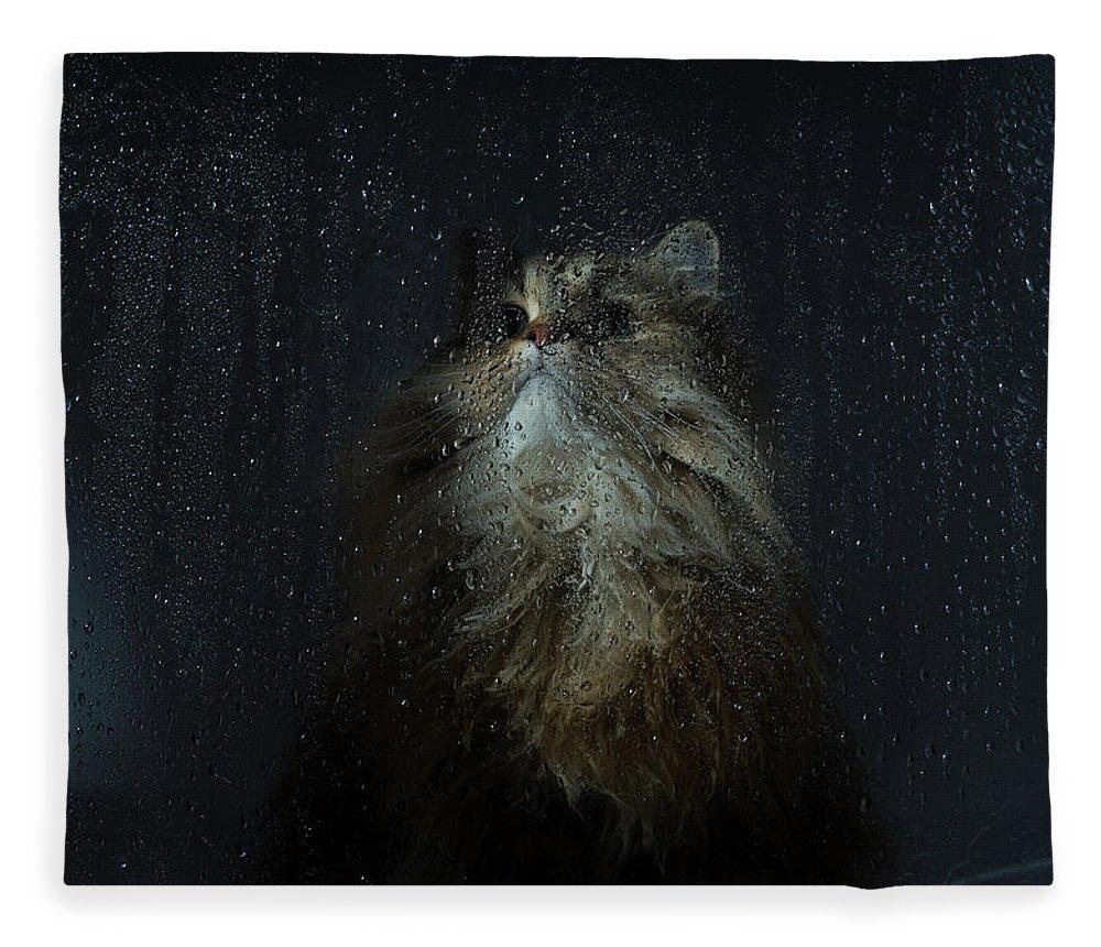 Pets Fleece Blanket featuring the photograph Cat By Rainy Window by Benjamin Torode