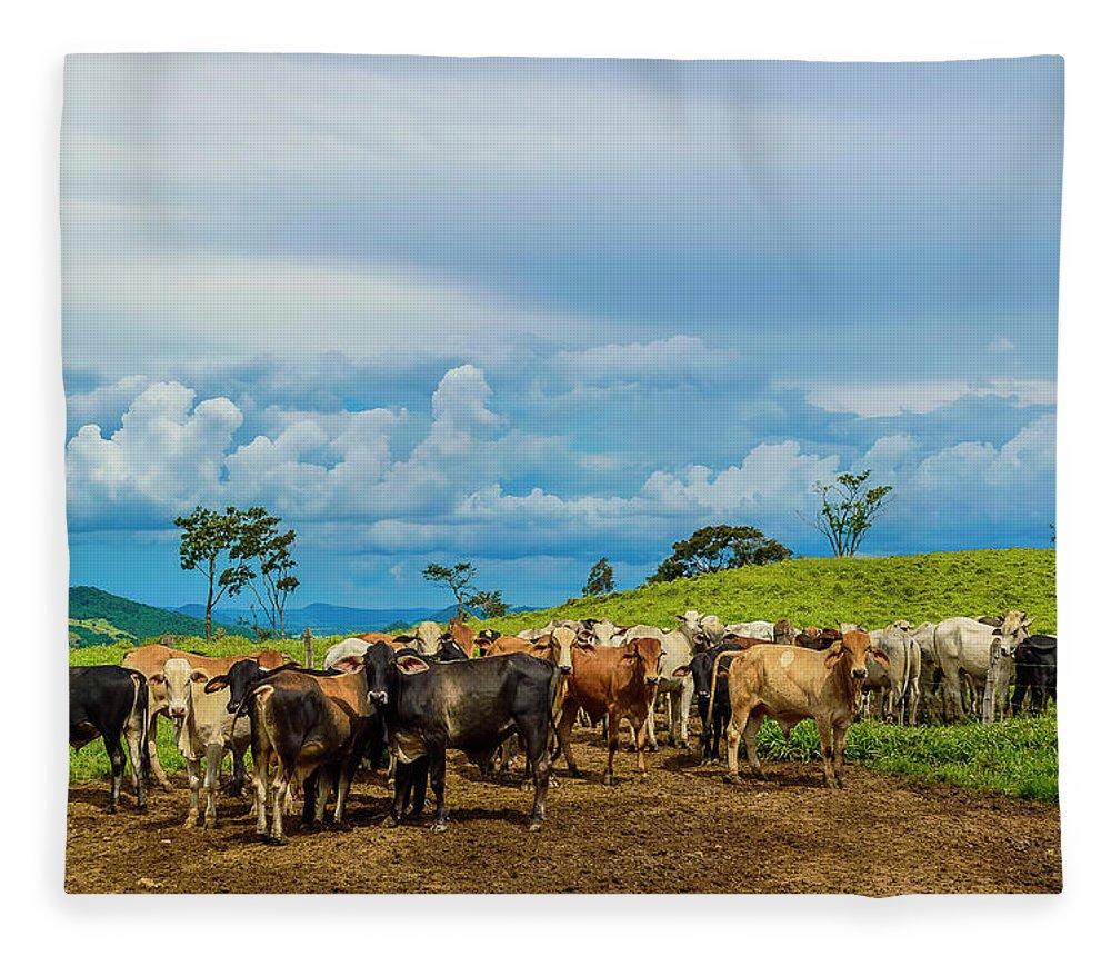 Grass Fleece Blanket featuring the photograph Cattle by Kcris Ramos