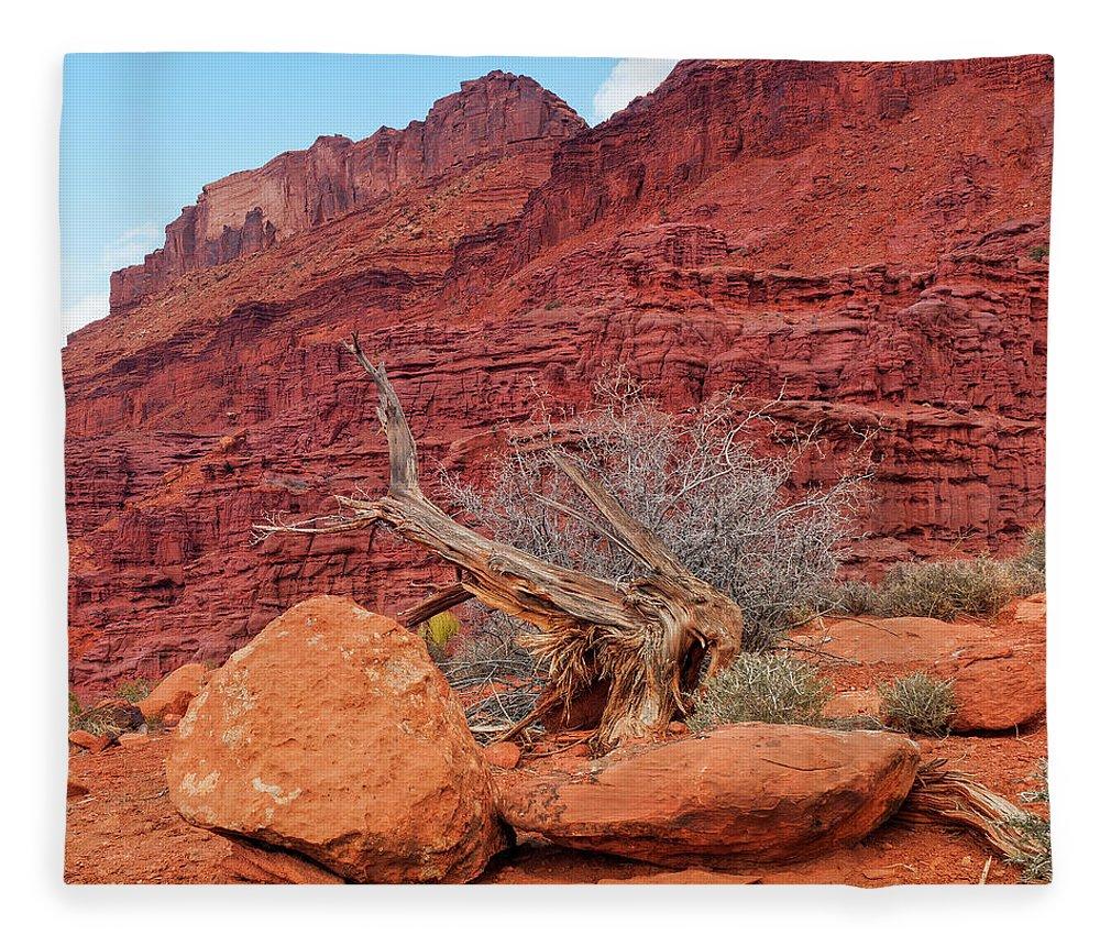 Cedar Tree Fleece Blanket featuring the photograph Cedar Wood Tree, Fisher Towers, Moab by Fotomonkee