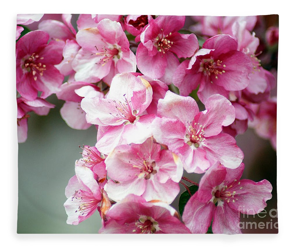 Pink Flower Fleece Blanket featuring the photograph Cherry Blossoms by Optical Playground By MP Ray