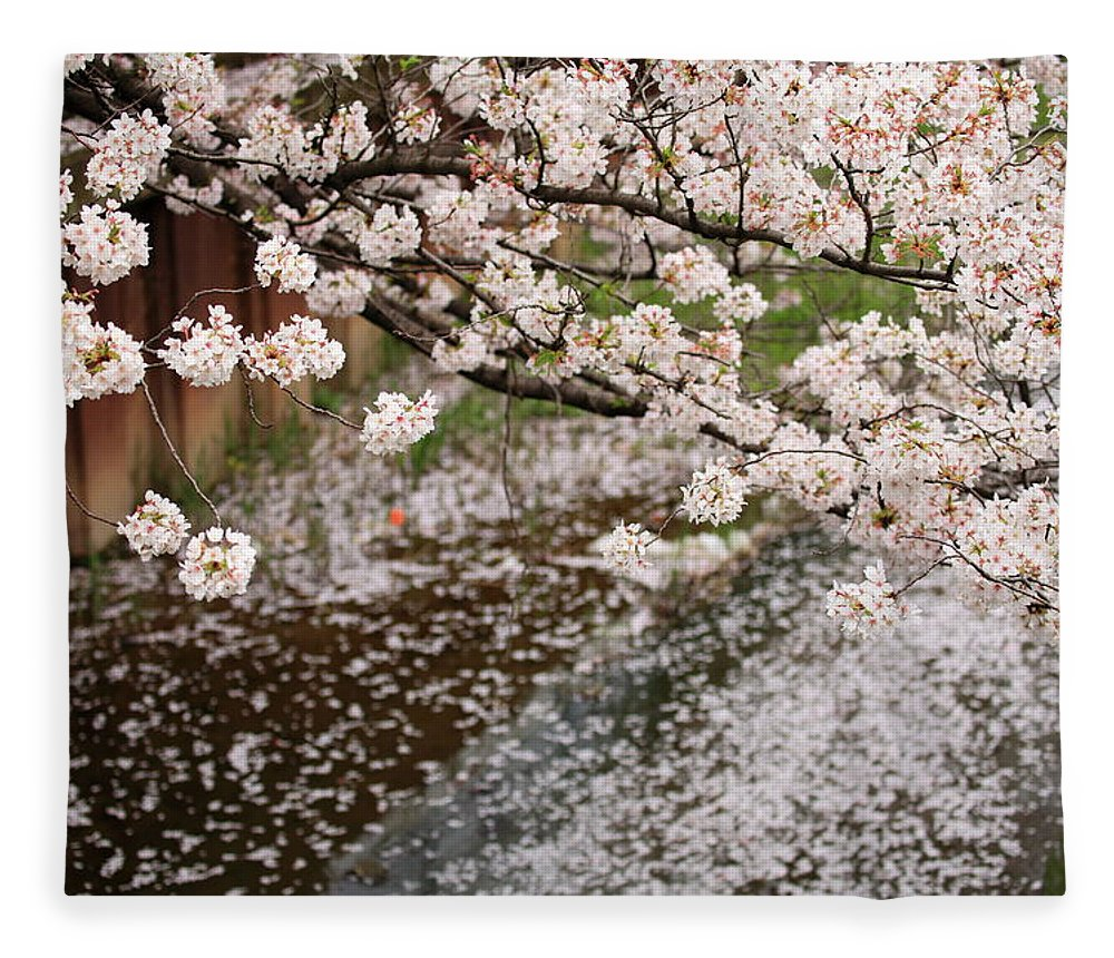 Season Fleece Blanket featuring the photograph Cherry Blossoms by Photography By Zhangxun