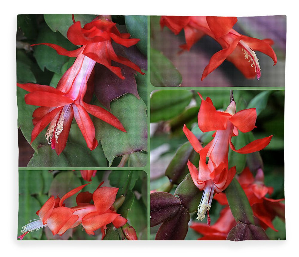 Christmas Cactus Fleece Blanket featuring the photograph Christmas Cactus Collage by Carol Groenen