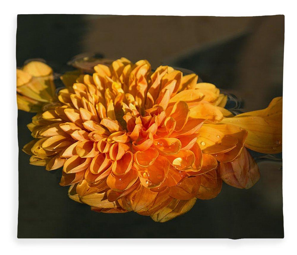 Georgia Mizuleva Fleece Blanket featuring the photograph Chrysanthemum Gently Floating In The Fountain Of Campo De Fiori - Rome - Italy by Georgia Mizuleva