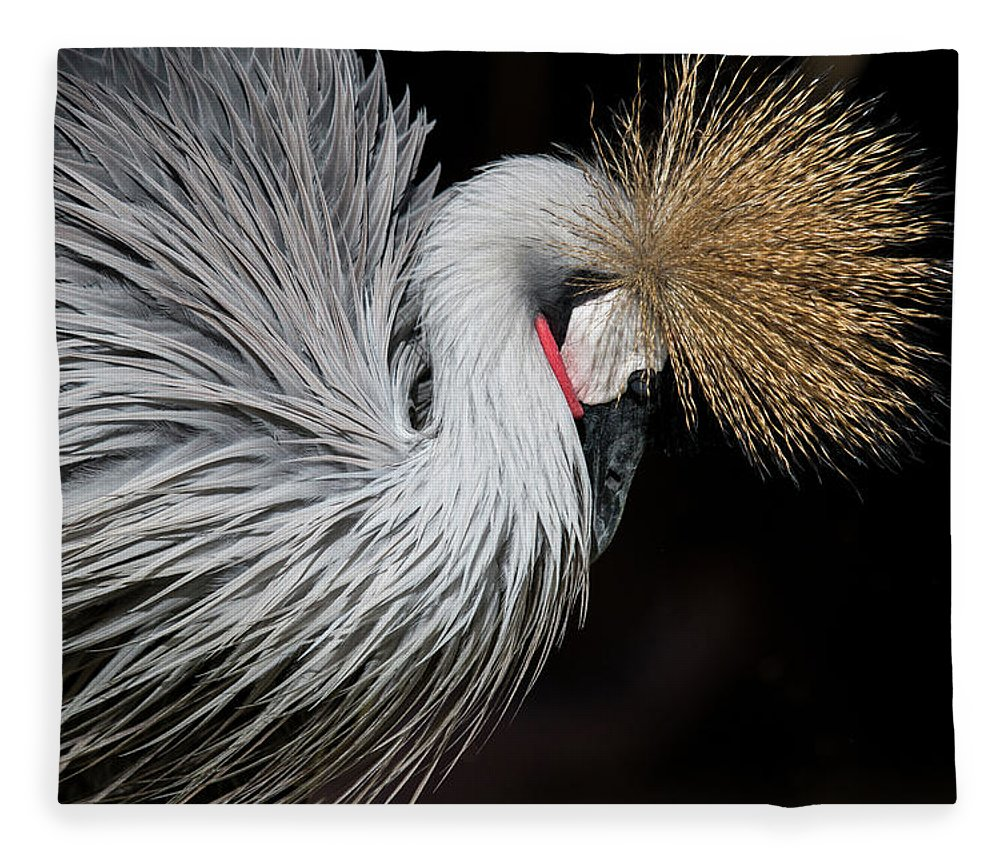 Tranquility Fleece Blanket featuring the photograph Close Portrait Of A Grey Crowned Crane by © Santiago Urquijo