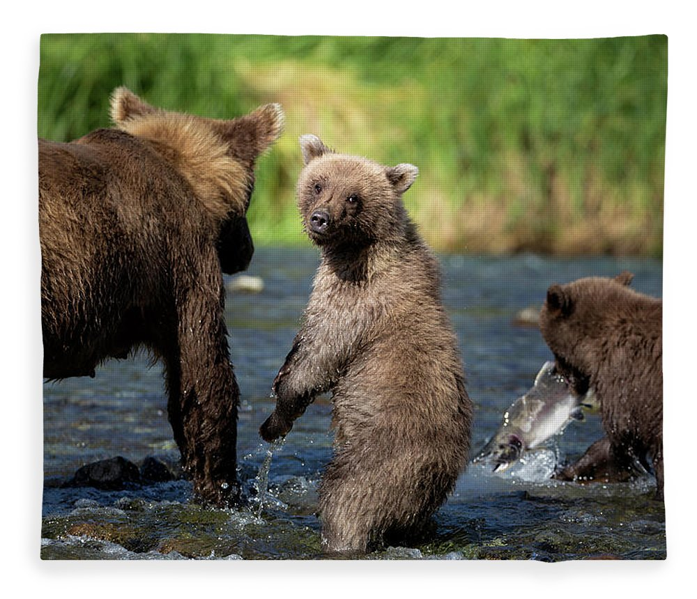Katmai Peninsula Fleece Blanket featuring the photograph Coastal Brown Bear Family by Justinreznick