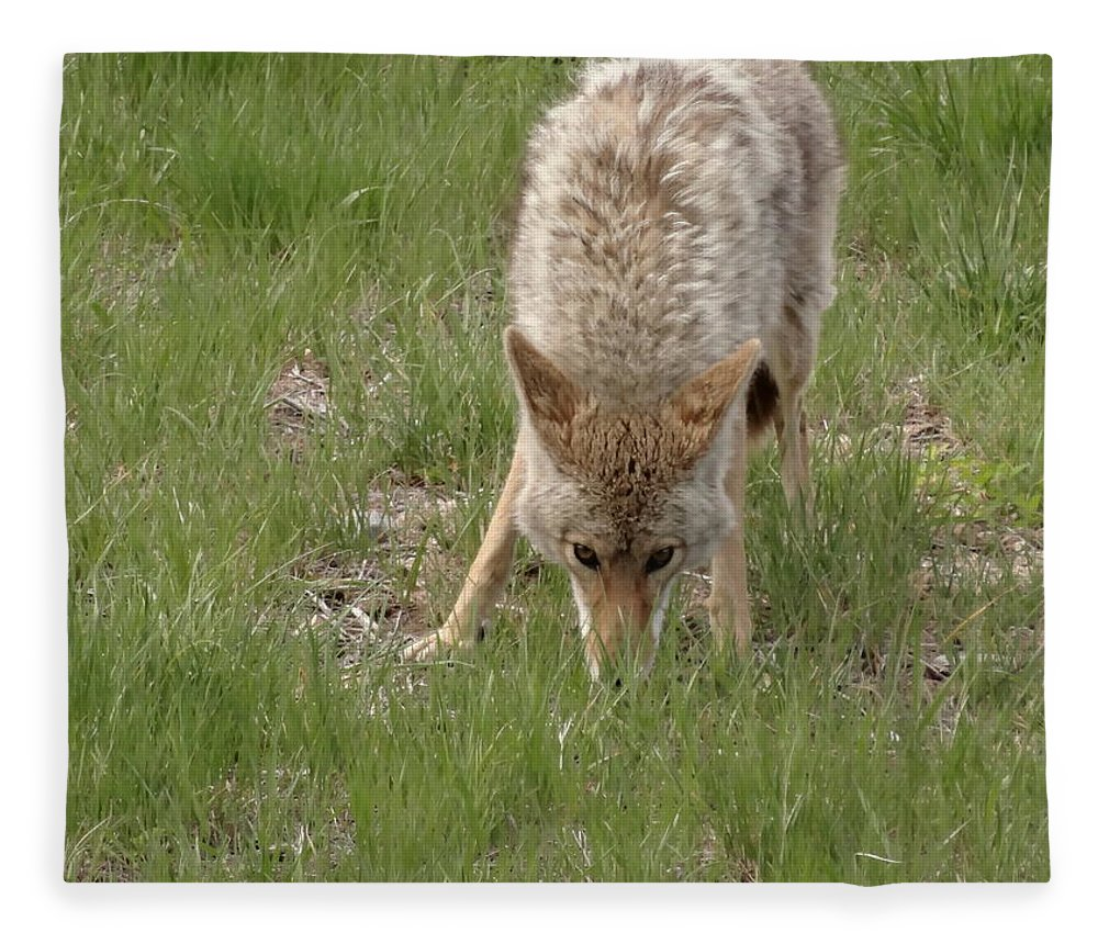 Coyote Fleece Blanket featuring the photograph Coyote Eyes by Dan Sproul