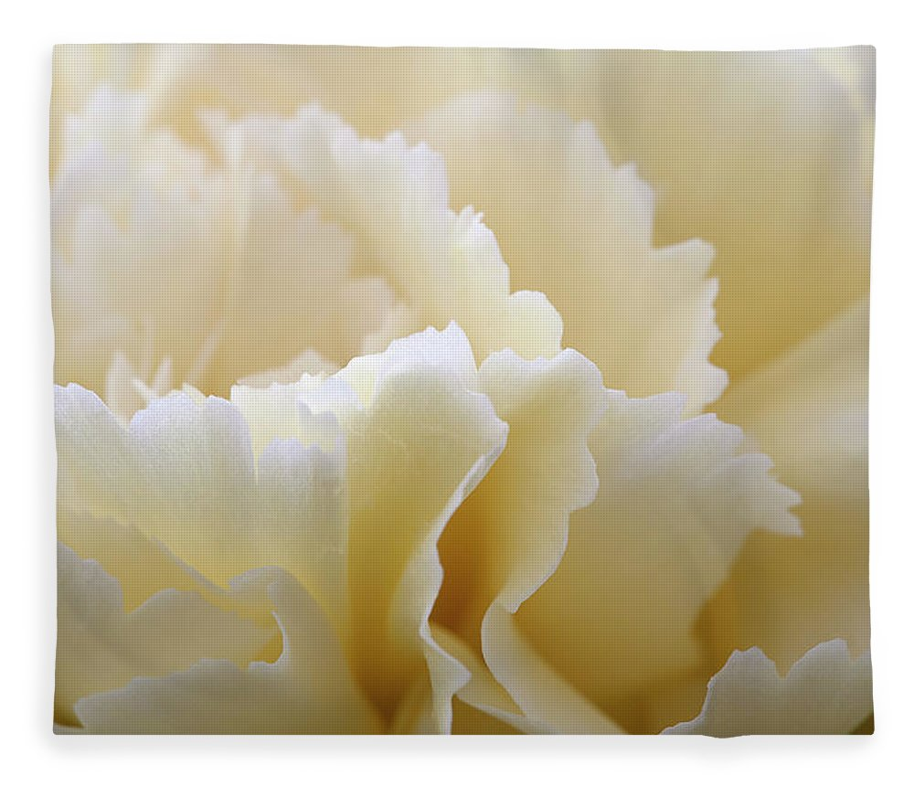 Netherlands Fleece Blanket featuring the photograph Cream Coloured Carnation, Close-up by Roel Meijer