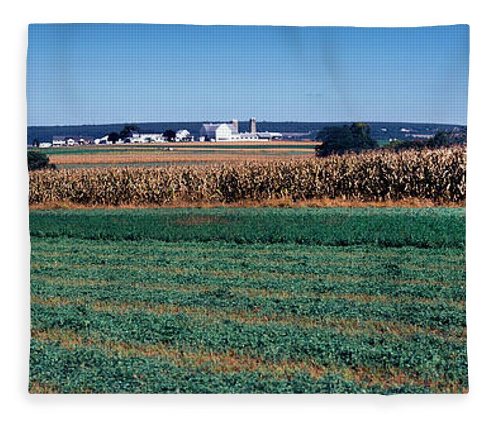 Photography Fleece Blanket featuring the photograph Crop In A Field, Amish Country, Holmes by Panoramic Images
