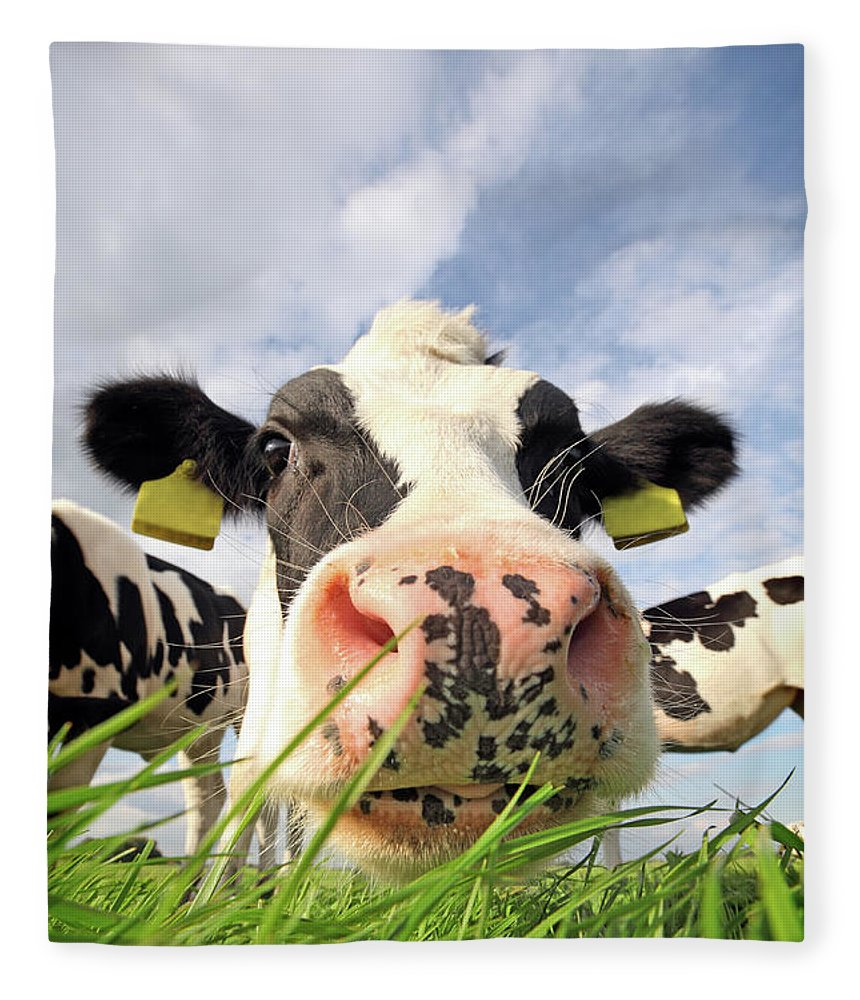 Grass Fleece Blanket featuring the photograph Curious Cow by Marcel Ter Bekke