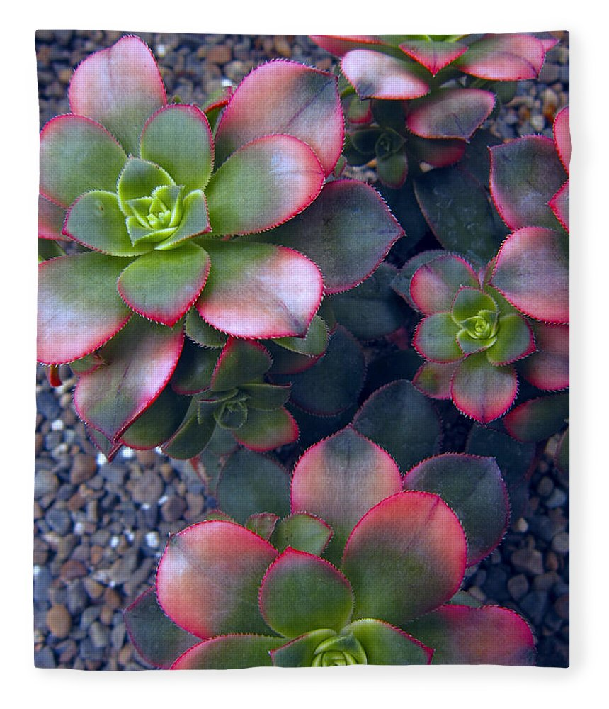 hens And Chicks Fleece Blanket featuring the photograph Desert Succulents by Daniel Hagerman