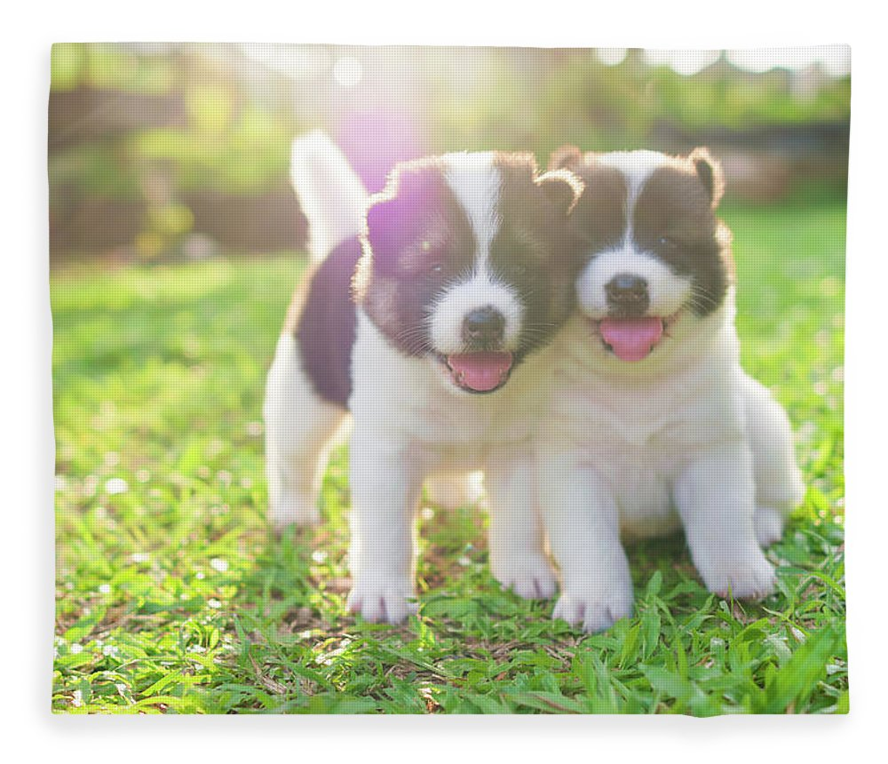 Pets Fleece Blanket featuring the photograph Dog And Puppies by Primeimages