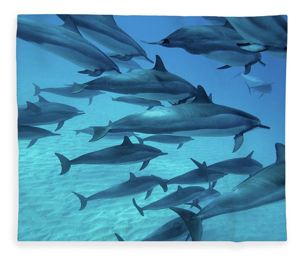 Underwater Fleece Blanket featuring the photograph Dolphins Spinners by M Swiet Productions