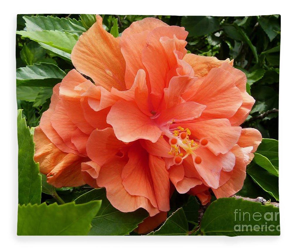 Double peach hibiscus fleece blanket for sale by amar sheow double peach hibiscus fleece blanket featuring the photograph double peach hibiscus by amar sheow izmirmasajfo