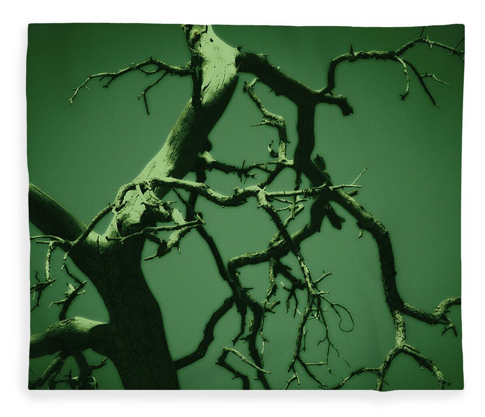 Tree Fleece Blanket featuring the photograph Dreaming Green by Paulina Roybal