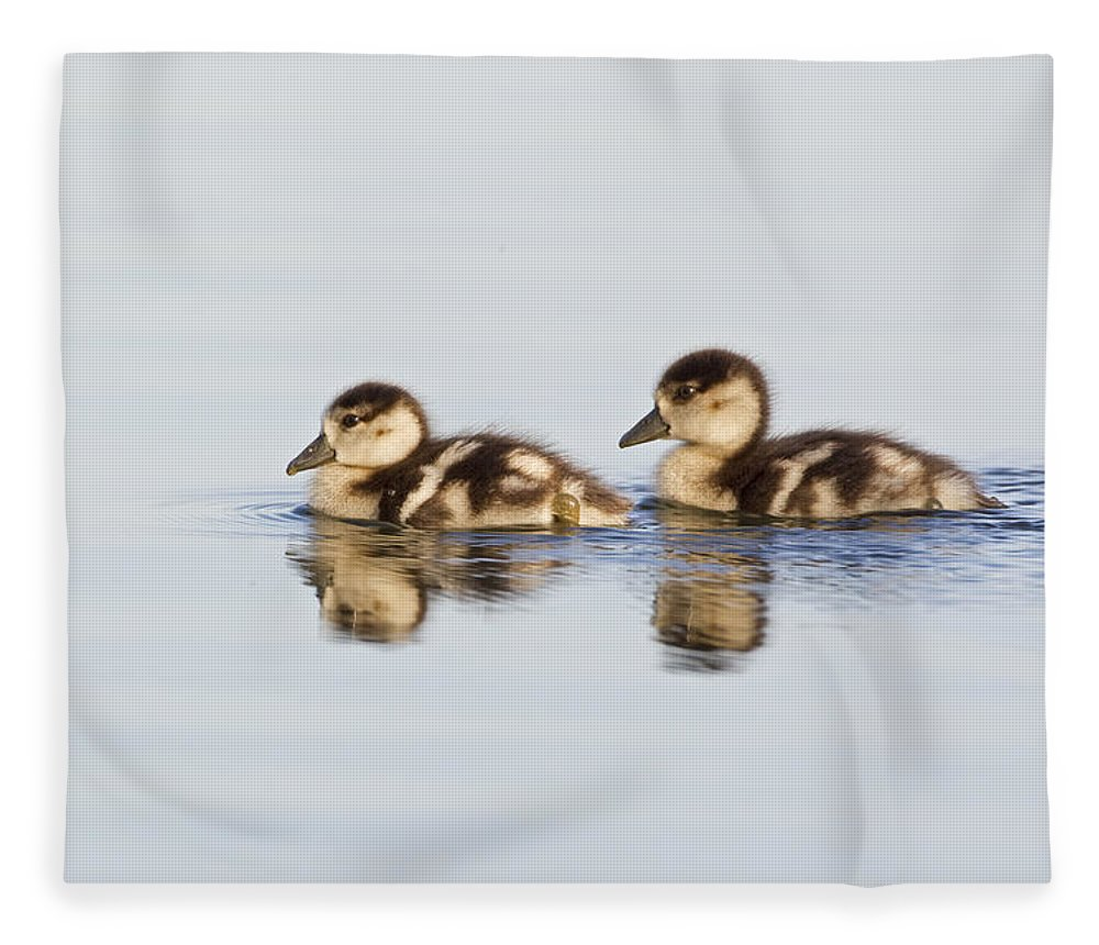 Flpa Fleece Blanket featuring the photograph Egyptian Goose Goslings River Thames by Dickie Duckett
