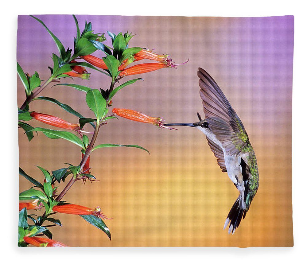Photography Fleece Blanket featuring the photograph Female Ruby-throated Hummingbird by Animal Images