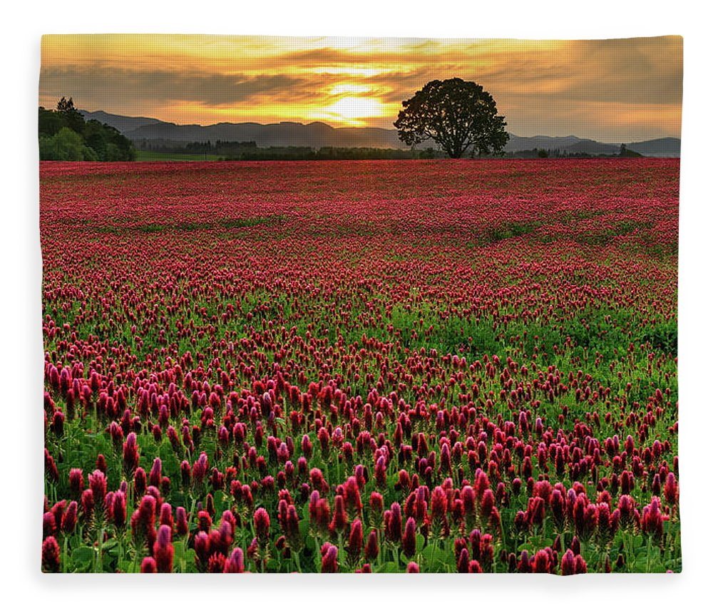 Scenics Fleece Blanket featuring the photograph Field Of Crimson Clover With Lone Oak by Jason Harris