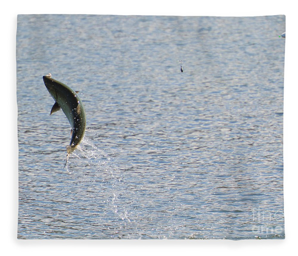 Chinook Salmon Fleece Blanket featuring the photograph Fighting Chinook Salmon by Mike Dawson
