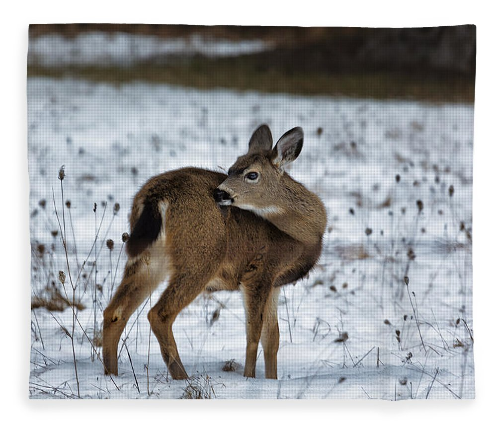 Fawn Fleece Blanket featuring the photograph First Winter by Belinda Greb