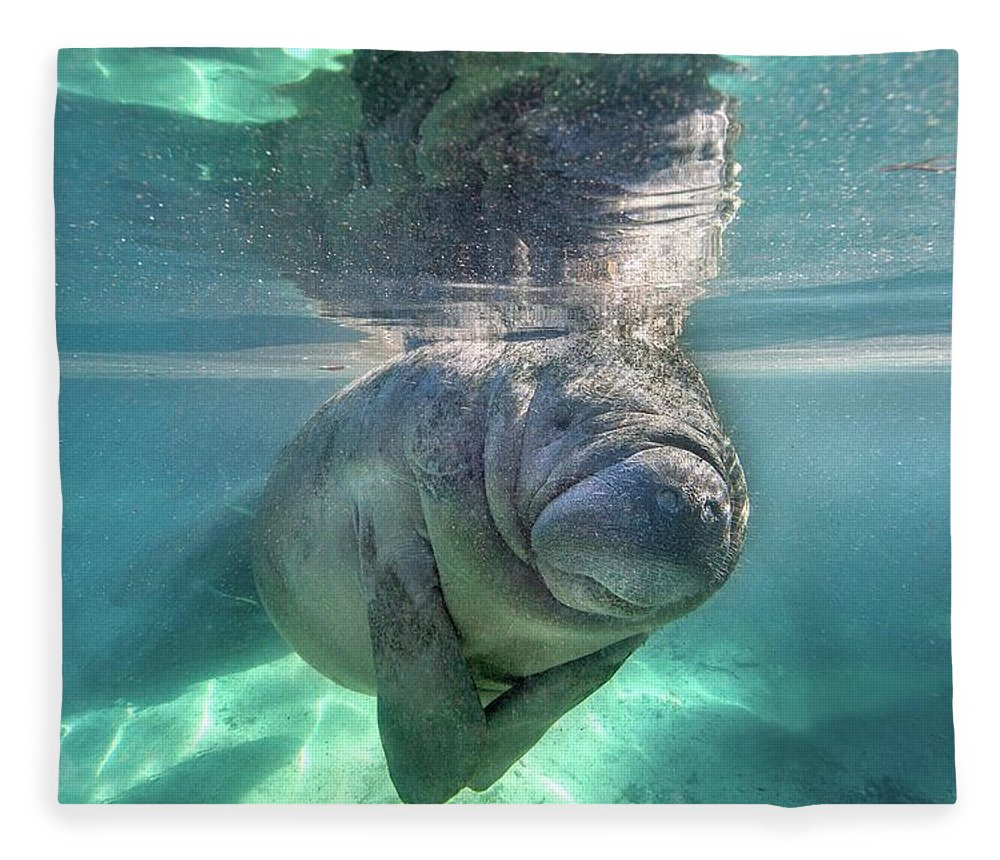 Underwater Fleece Blanket featuring the photograph Florida Manatee by Ai Angel Gentel