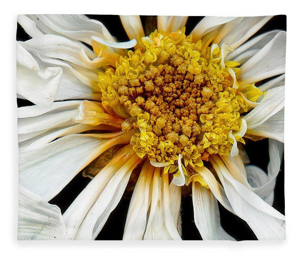 Flower Fleece Blanket featuring the photograph Flower - Daisy - Drunken Sun by Mike Savad