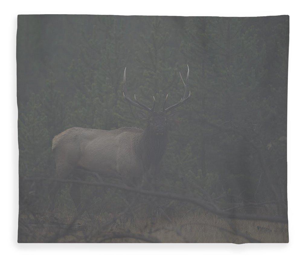 Foggy Fleece Blanket featuring the photograph Foggy Morning Bull Elk by Gary Langley