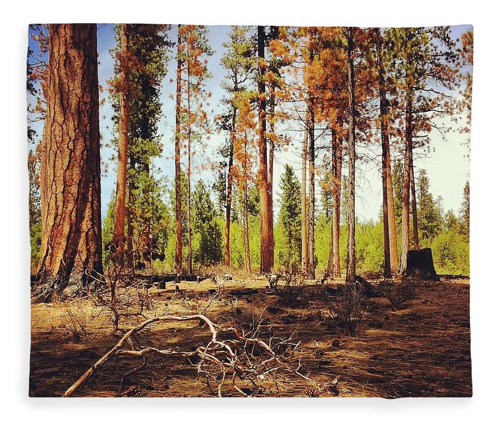 Scenics Fleece Blanket featuring the photograph Forest Burn Area by Andipantz
